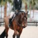 paardrijbroek